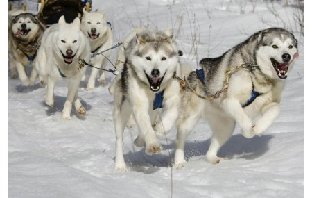 Hébergement / Traîneau à chiens