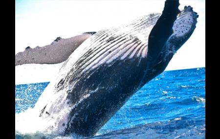 Forfait Baleine